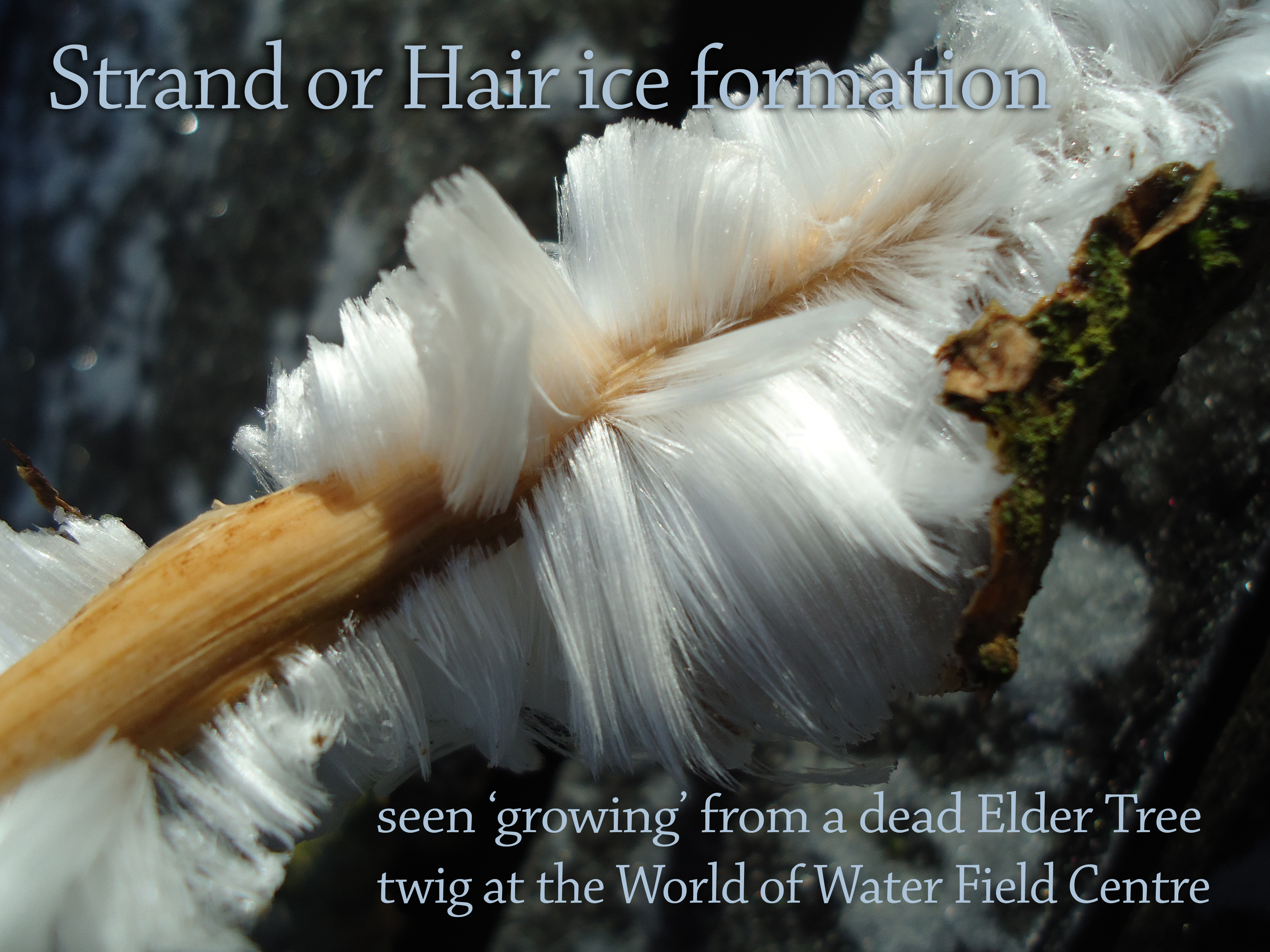 Strand of Hair ice crystal formation