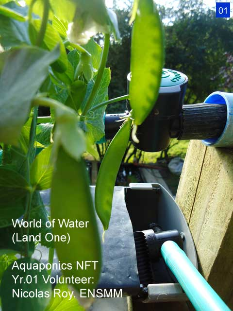 World of Water Aquaponics Yr.1